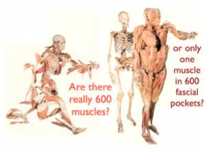 Image copied from anatomytrains.com